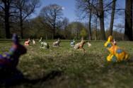 Hasenheidenhasen in der Hasenheide, 2011